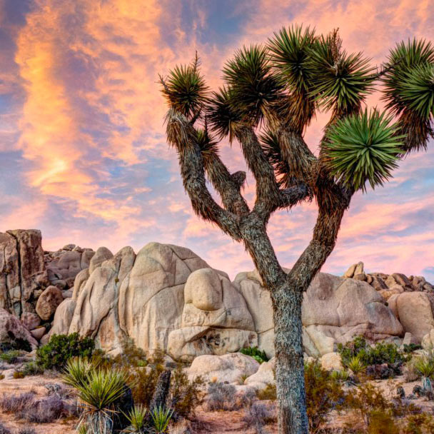 Yucca Valley - 260 km